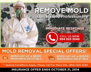Mold Removal Restoration