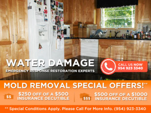 Mold Removal south florida