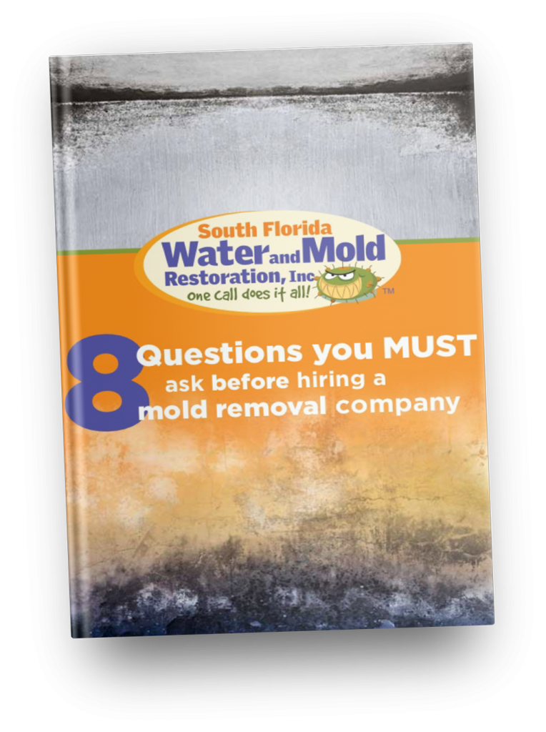 mold removal contractor