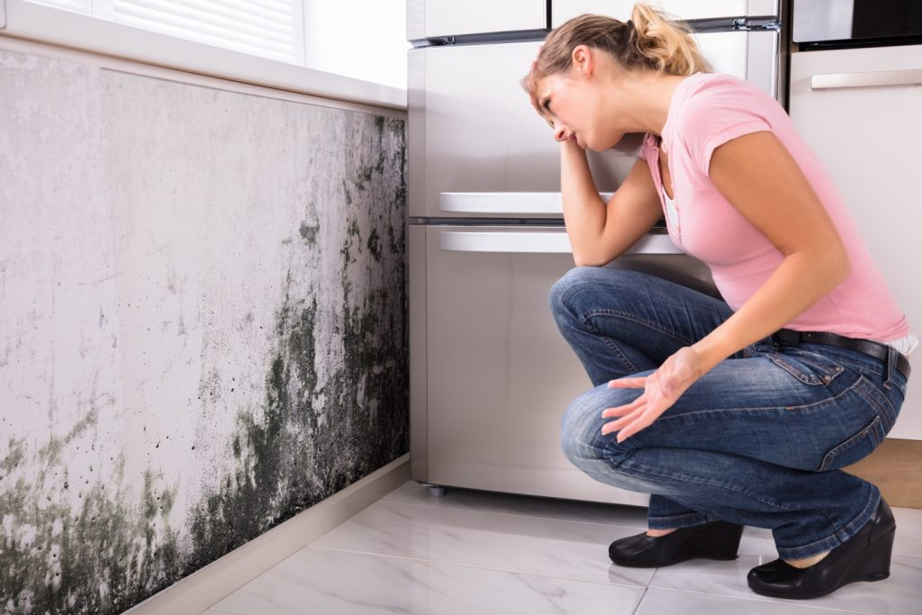 hollywood fl mold removal